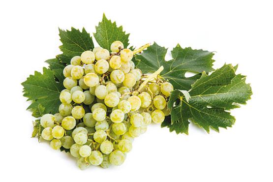 Uva bianca Italia, al kg