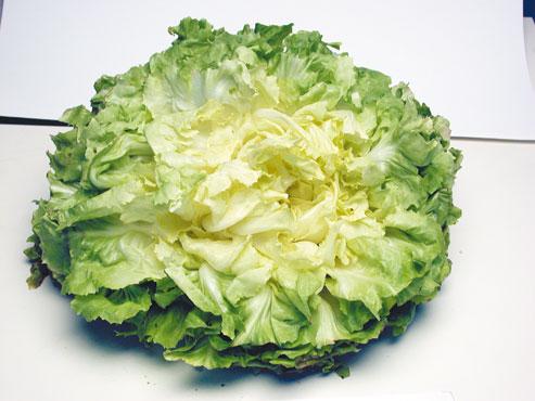 Insalata scarola - insalata riccia al kg